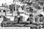 யாழ். பல்கலைக்லக் கழகத்தில் - பெண்களுக்கெதிரான வன்முறைகளற்ற வாழ்வை கொண்டாடுவோம் கண்காட்சி.